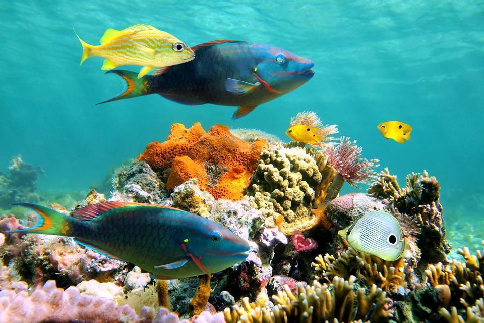 Fish vs fishes - Grammarist