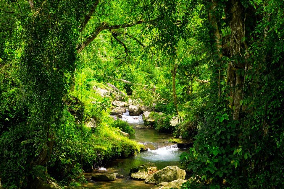 Les paysages, nigéria, afrique, mont, Shebshi