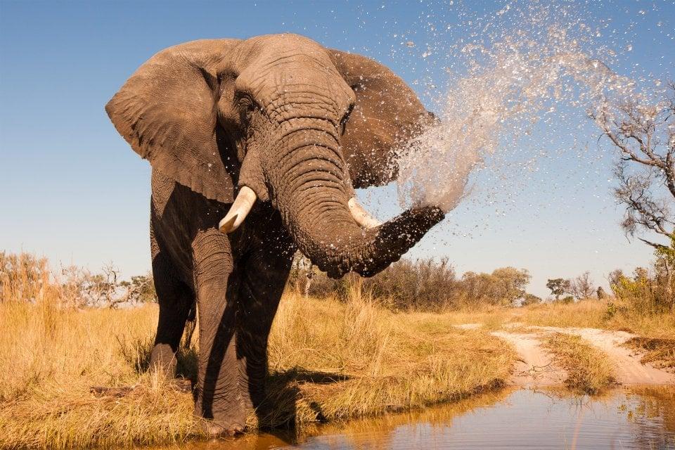 La faune et la flore, nigéria, afrique, ouest, faune, animal, parc, yankari, mammifère, éléphant