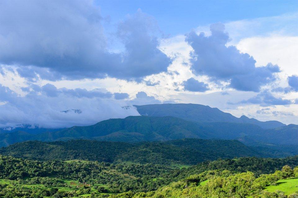 La faune et la flore, mambilla, chappal wadi, nigéria, afrique, caméroun, montagne, mont, jungle, Gashaka Gumpti, parc