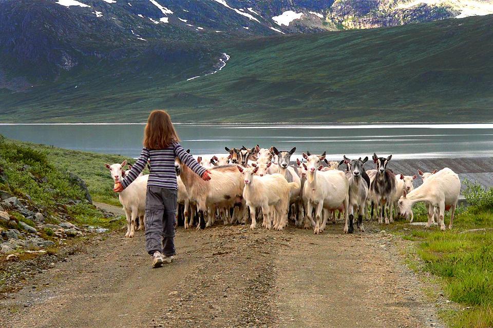 Breeding farms , Norway