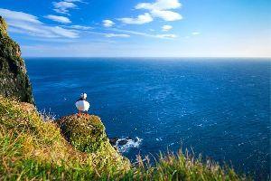 Les oiseaux , Deux macareux , Norvège