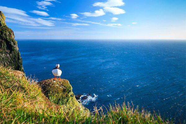 Las aves , Dos frailecillos , Noruega