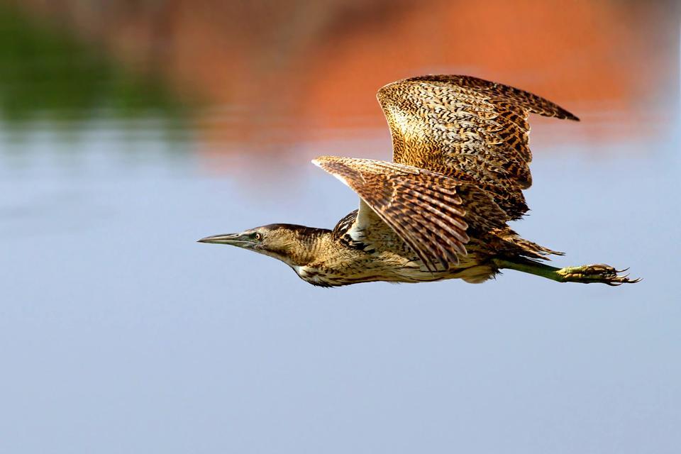 Gli uccelli , Norvegia
