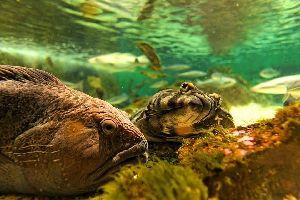 La faune sous-marine , La faune sous-marine norvégienne , Norvège