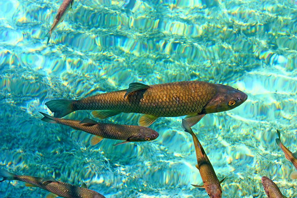La fauna submarina , Noruega