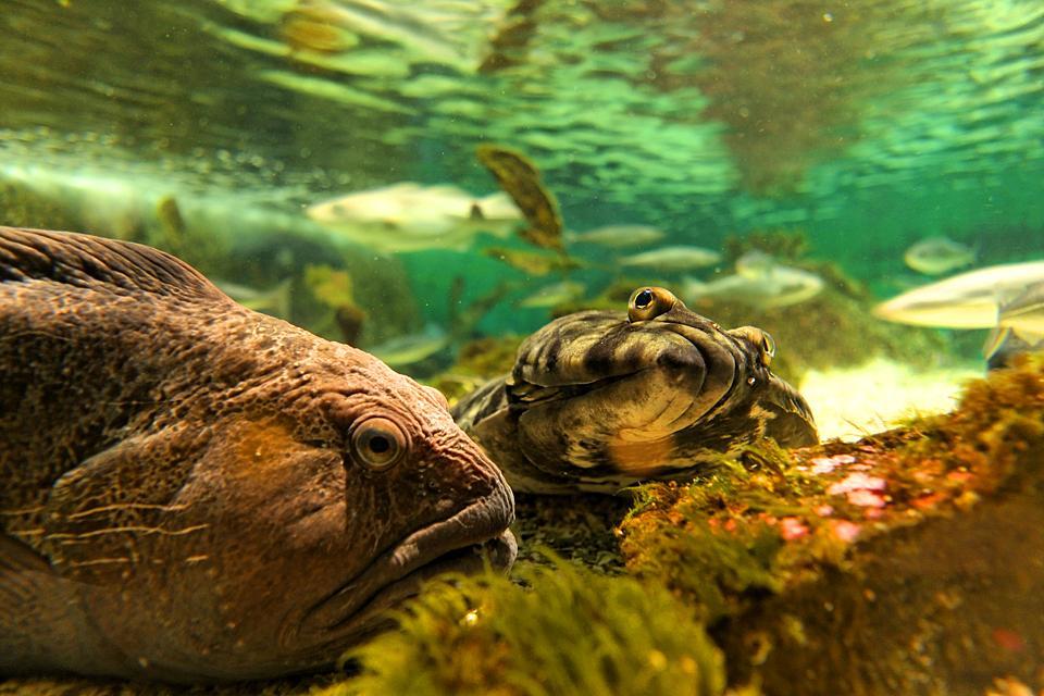 La fauna submarina , La fauna submarina noruega , Noruega