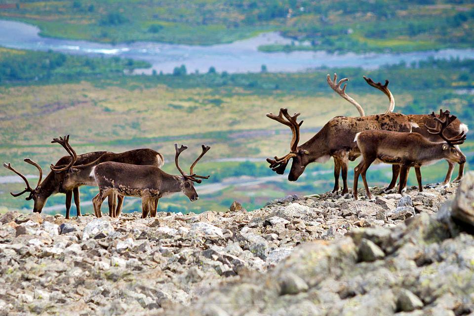 Le parc national de Jotunheimen  , Norvège