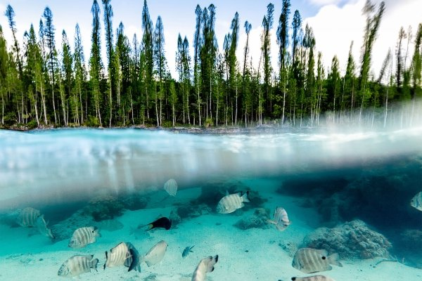 The Isle of Pines , The caves , New Caledonia