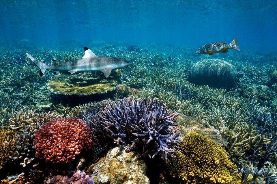 Les côtes, mélanésie, océanie, Caledonie, Grande-Terre, Nouvelle, france, poisson, faune, sous-marine, requin, île