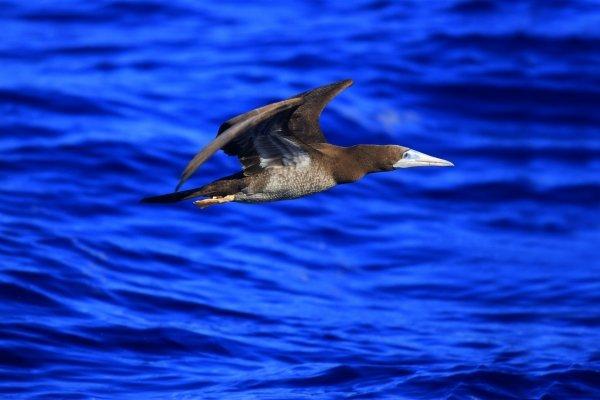 Grande Terre , La faune terrestre , Nouvelle-Calédonie