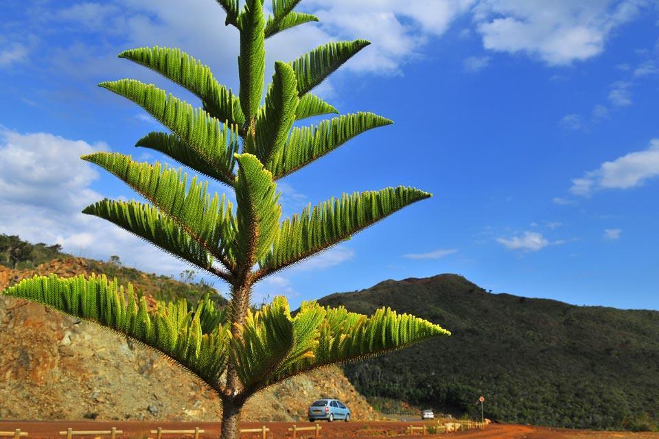 Grande Terre , La flore , Nouvelle-Calédonie