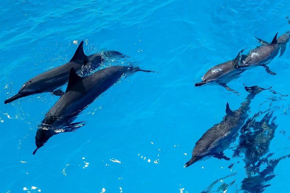 Die Insel der Pinien - die Fauna, Die Fauna und Flora, Neukaledonien
