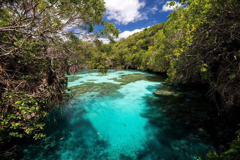 La faune et la flore, Caledonie, Grande-Terre, Nouvelle-Caledonie, océanie, france, poisson, faune, sous-marine, mélanésie, piscine