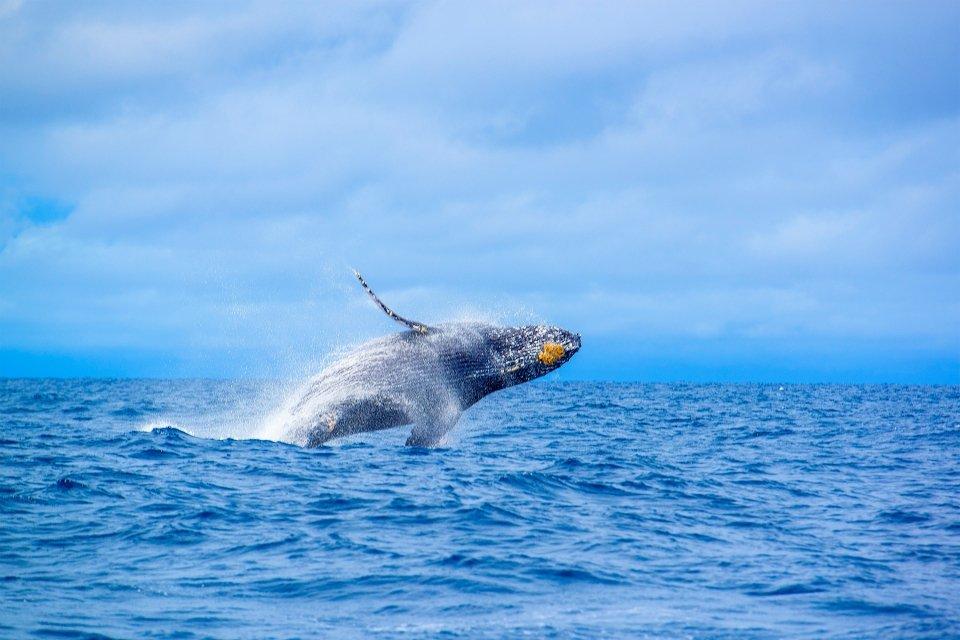 La faune et la flore, Caledonie, Grande-Terre, Nouvelle-Caledonie, océanie, france, poisson, faune, sous-marine, mélanésie, baleine, mammifère, cétacé