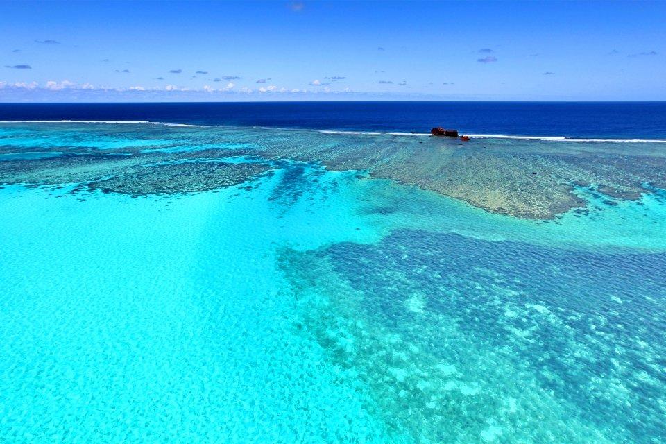 Le lagon sud, Le récif corallien, La faune et la flore, Nouvelle-Calédonie