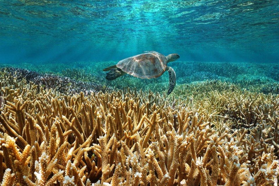 La faune et la flore, Grande Terre, Nouvelle Calédonie, récif, océan, france, tortue, corail, faune, reptile, animal