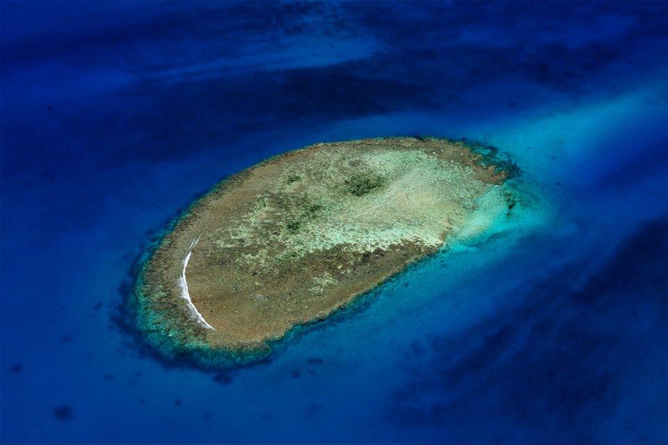 Le récif corail à Corne Sud, Le récif corallien, La faune et la flore, Nouvelle-Calédonie