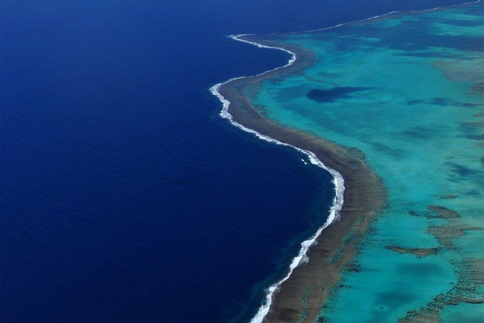 Le lagon Poé, Le récif corallien, La faune et la flore, Nouvelle-Calédonie