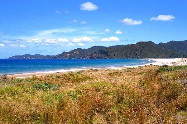 Great Barrier Island , Nueva Zelanda