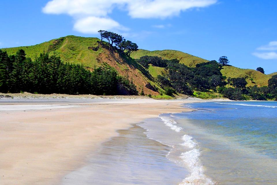 Great Barrier Island , New Zealand