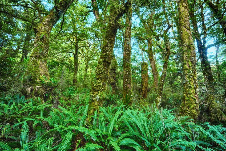 Südinsel , der Nationalpark von Fiordland , Neuseeland