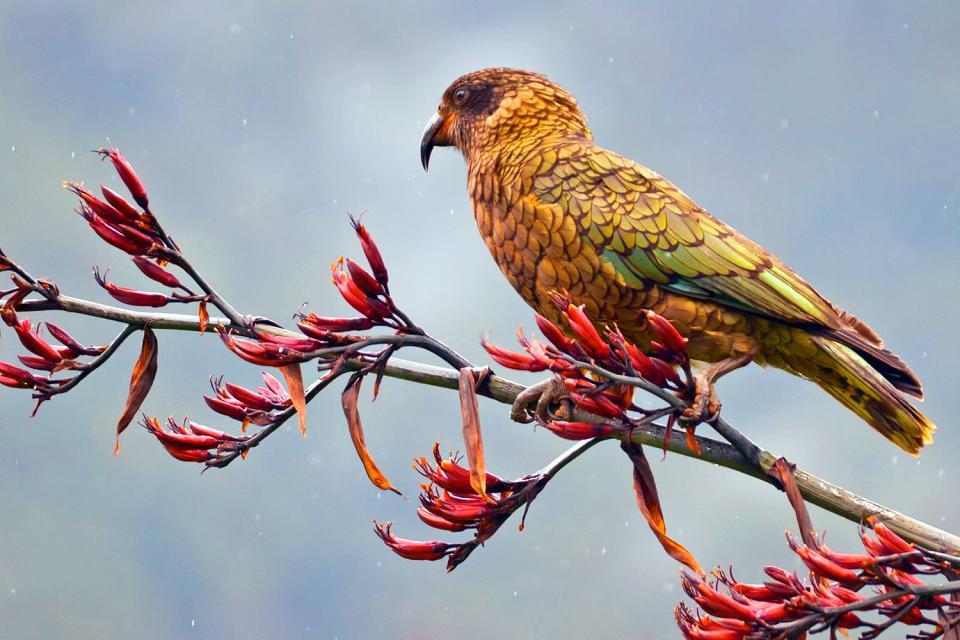 Birds , New Zealand