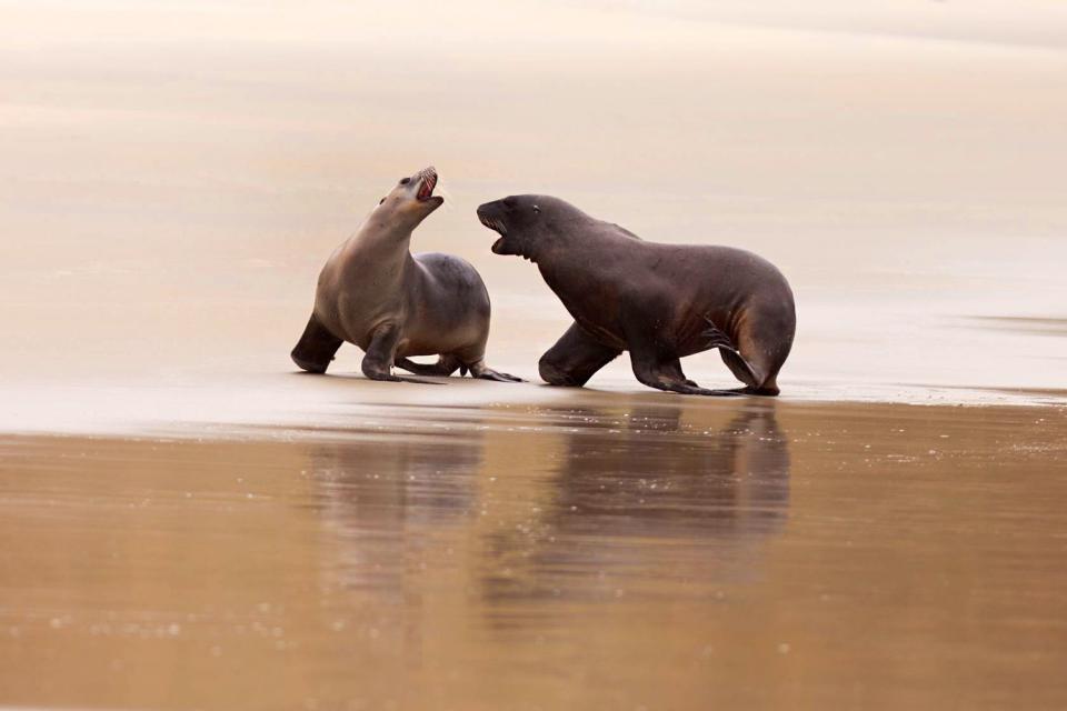 Fauna , New Zealand