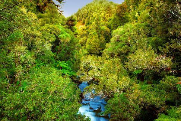 Flora , New Zealand