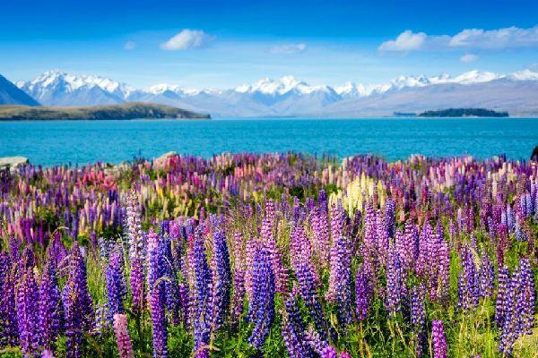 La flora , Nueva Zelanda