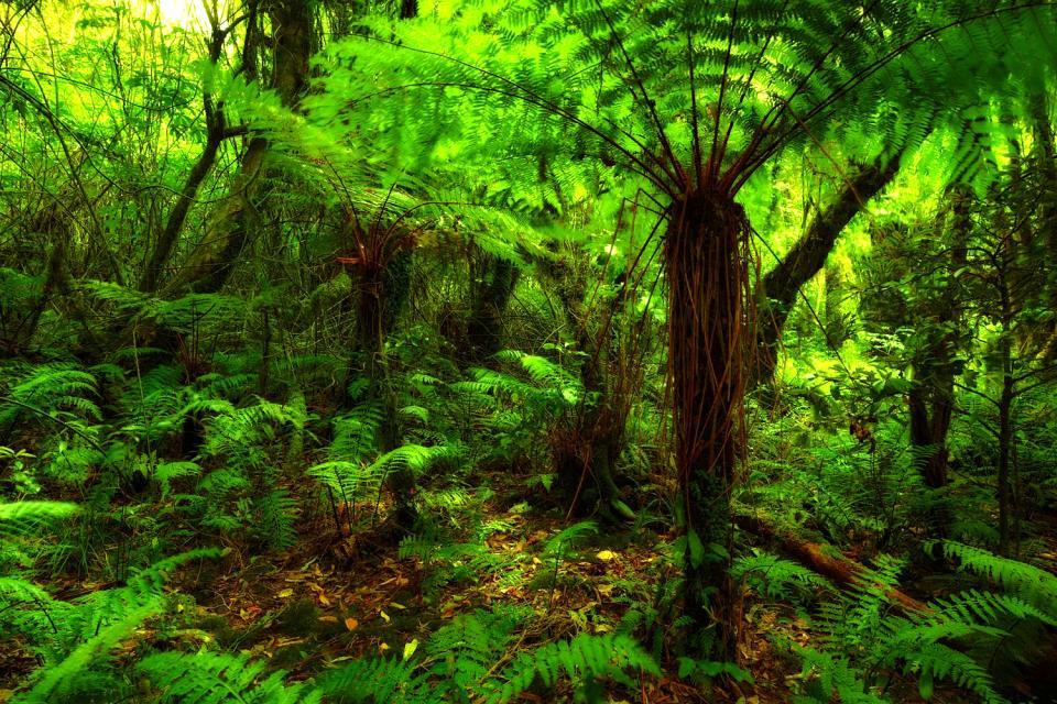 Die Flora , Neuseeland