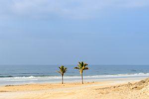 Les paysages, Dhofar, côte, oman, sultanat, moyen-orient, proche-orient, Al Mughsayl, plage, palmier, mer, flore