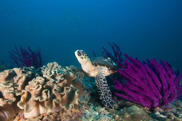 Le tartarughe di Ras al-Hadd, La fauna e la flora, Oman