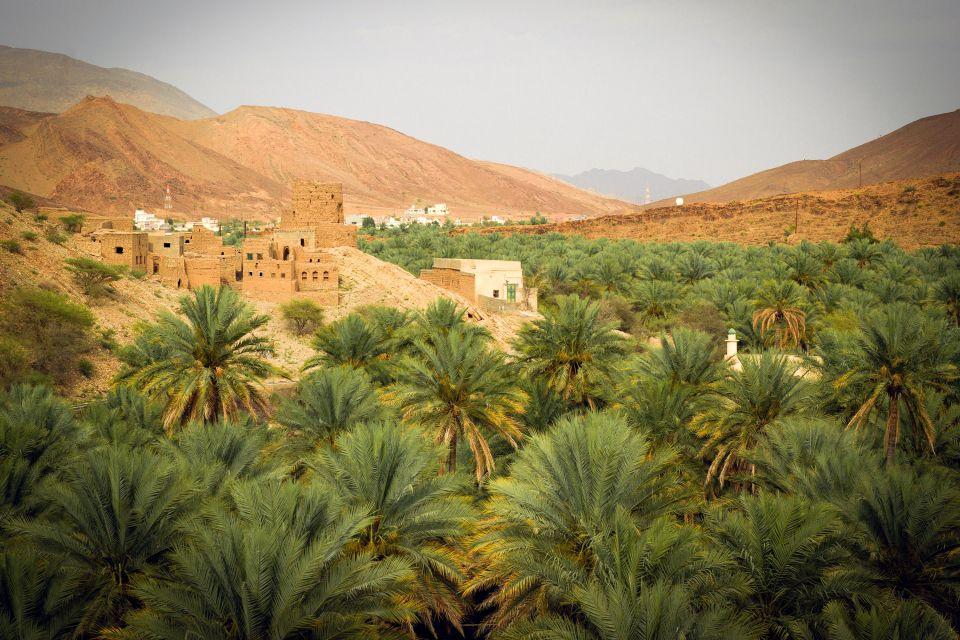 La faune et la flore, flore, datte, fruit, arbre, palmier, dattier, oasis, Birkat Al Mawz, Nizwa, Oman, sultanat, moyen-orient, proche-orient
