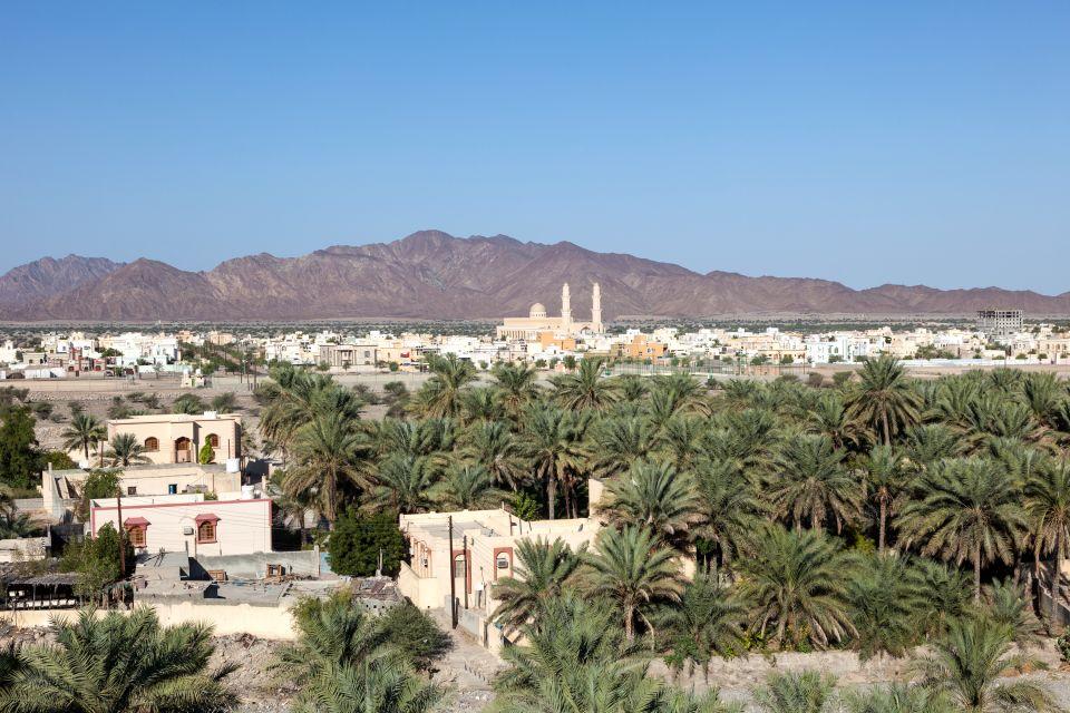 La faune et la flore, flore, datte, fruit, arbre, palmier, dattier, oasis, Oman, sultanat, moyen-orient, proche-orient