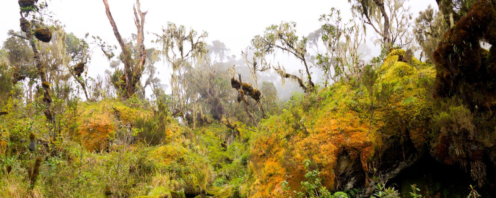 Le montagne del Ruwenzori, I paesaggi, Uganda