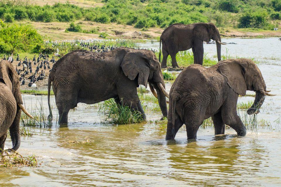, Ruwenzori National Park, Landscapes, Uganda