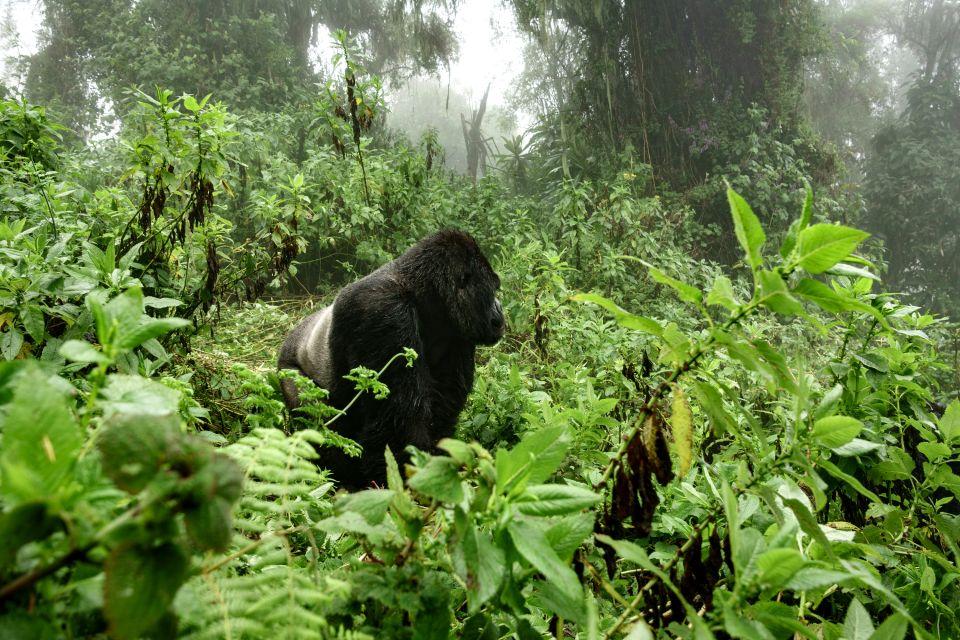 , Mgahinga National Park, Landscapes, Uganda