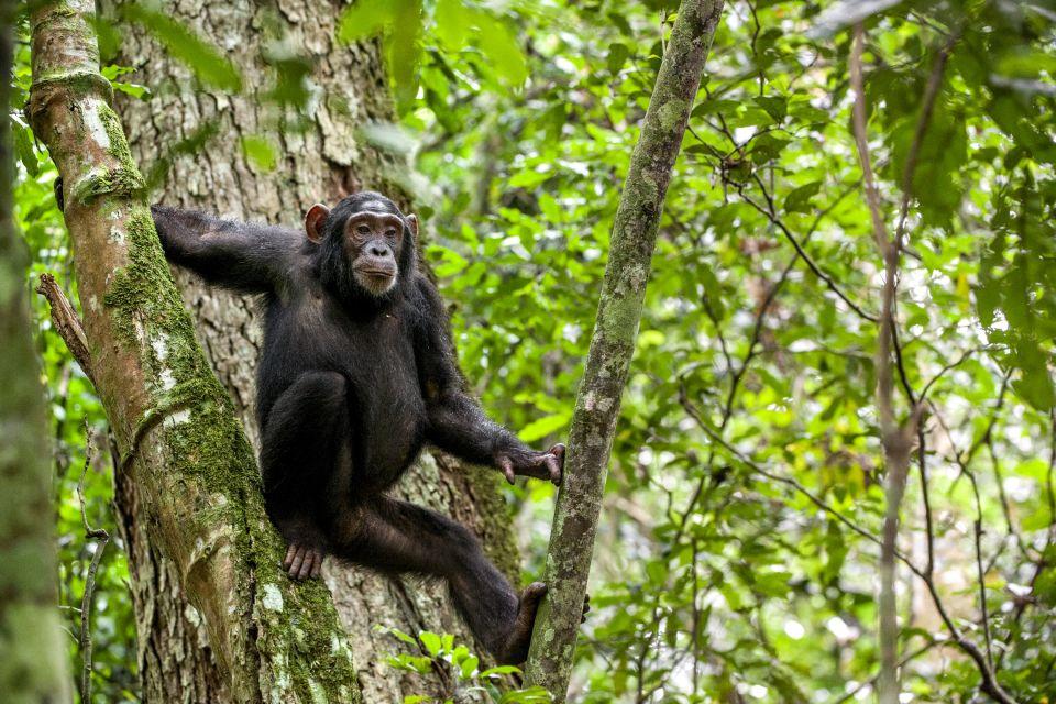 Kibale National Park, Kibale forest national park, Landscapes, Uganda