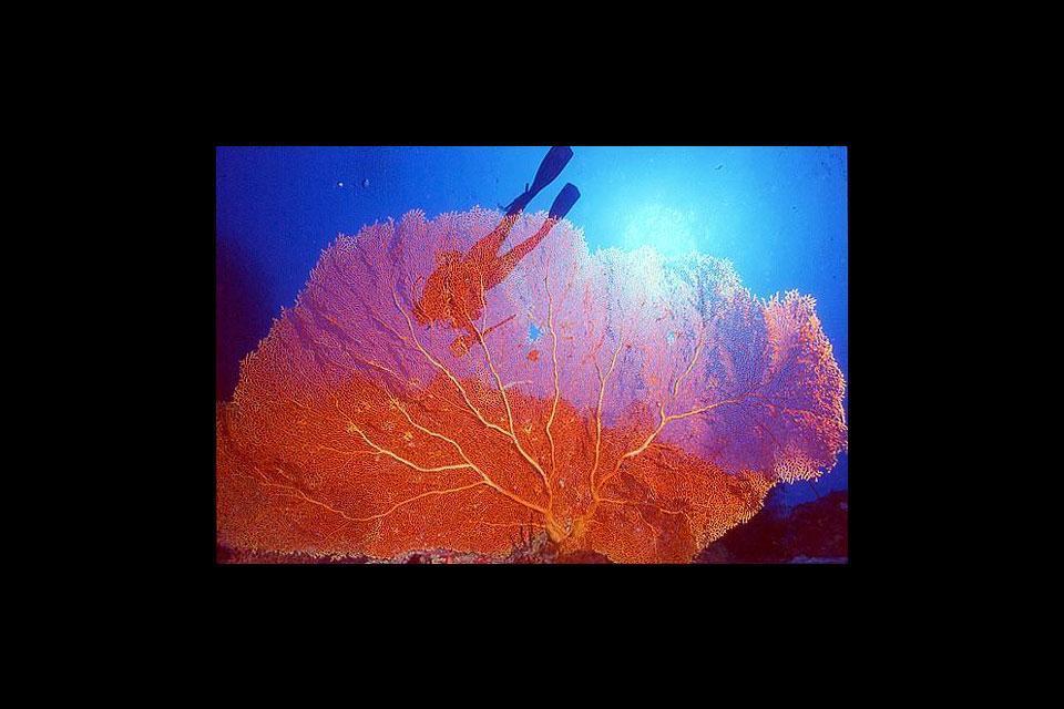 Diving sites , Papua New Guinea