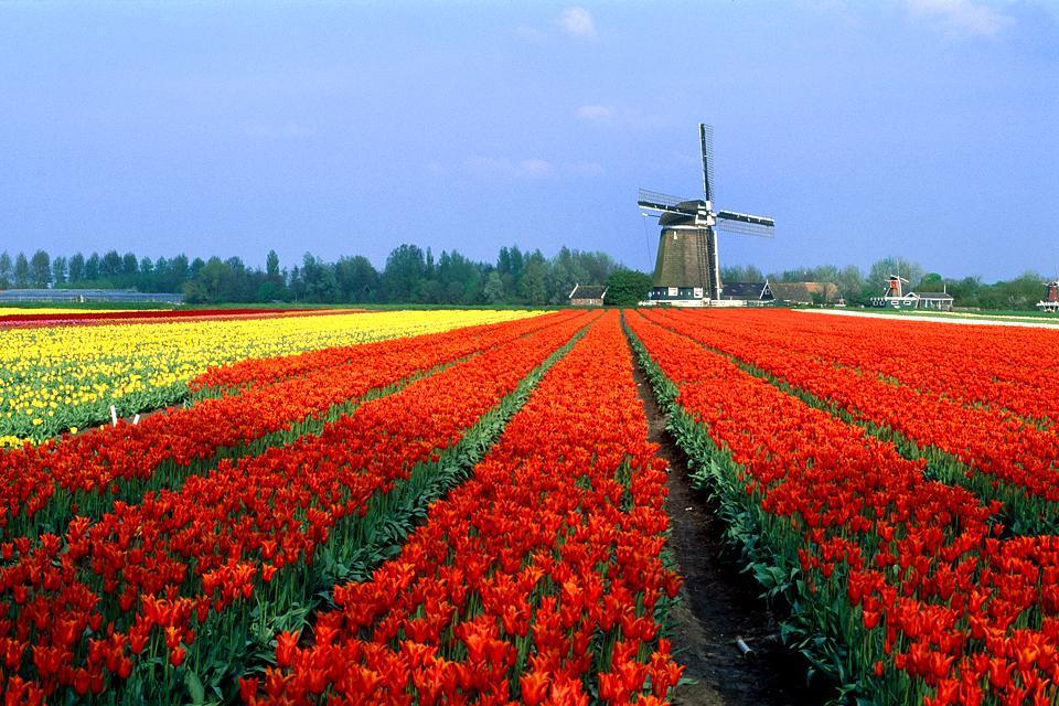 Les paysages horticoles , Pays-Bas