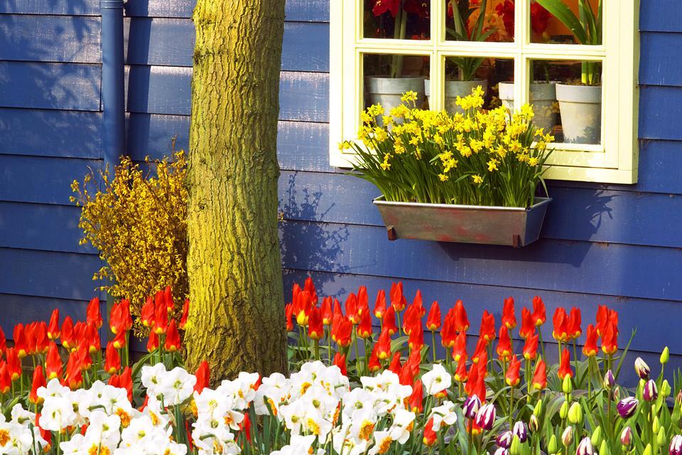 Les jardins botaniques , Pays-Bas