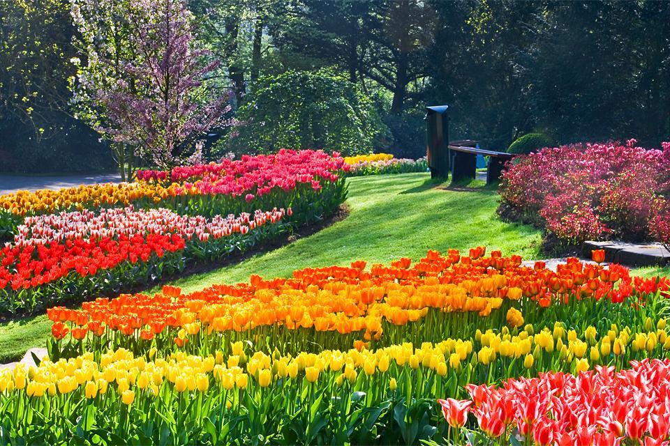 Les Jardins Botaniques Pays Bas