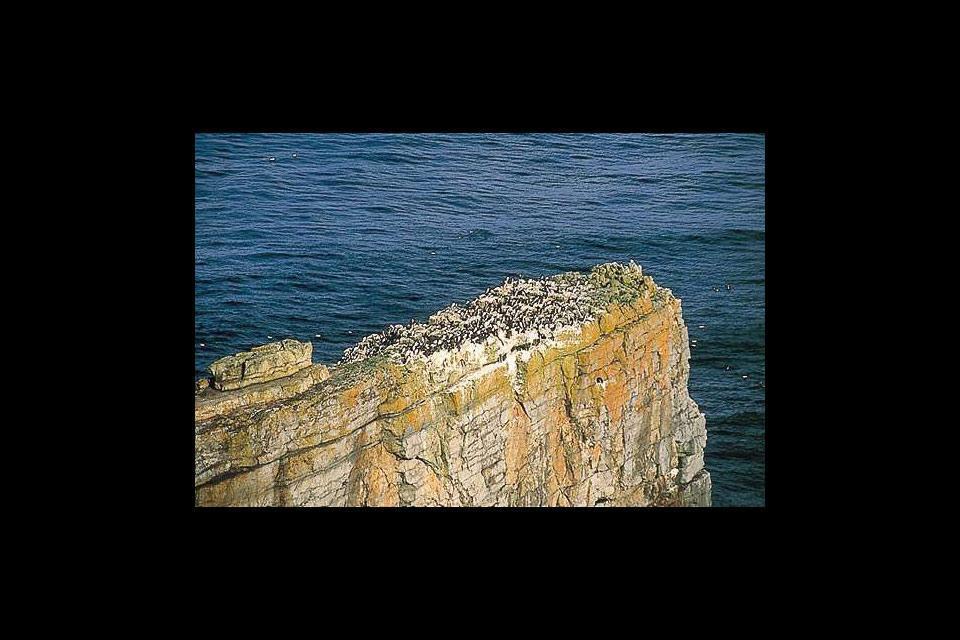 Gli uccelli , Regno Unito