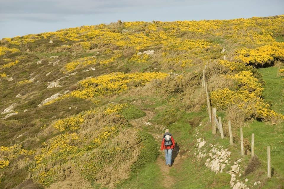 La flora , Un escursionista nel Pembrokeshire , Regno Unito