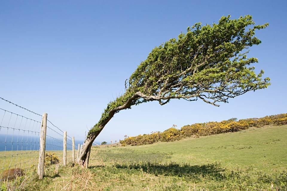 La flora , Un albero pendente , Regno Unito