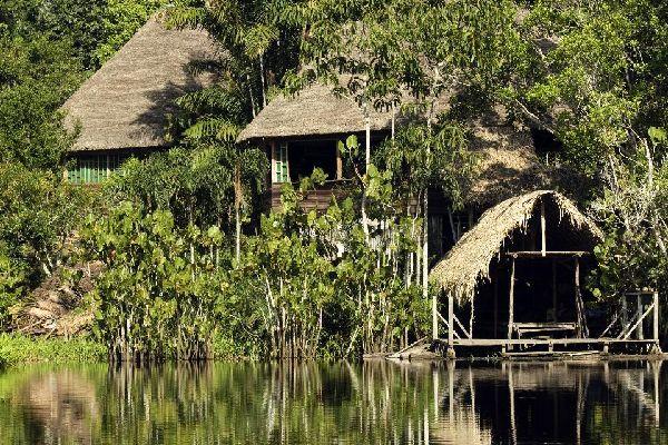 The Amazon jungle , Peru