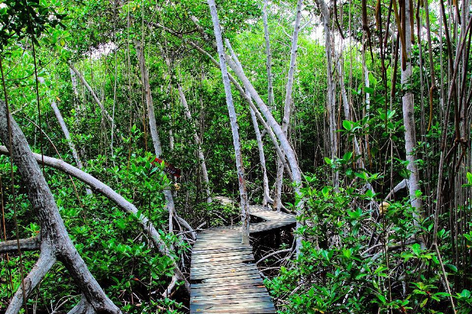 La giungla amazzonica per for Come costruire una palestra nella giungla