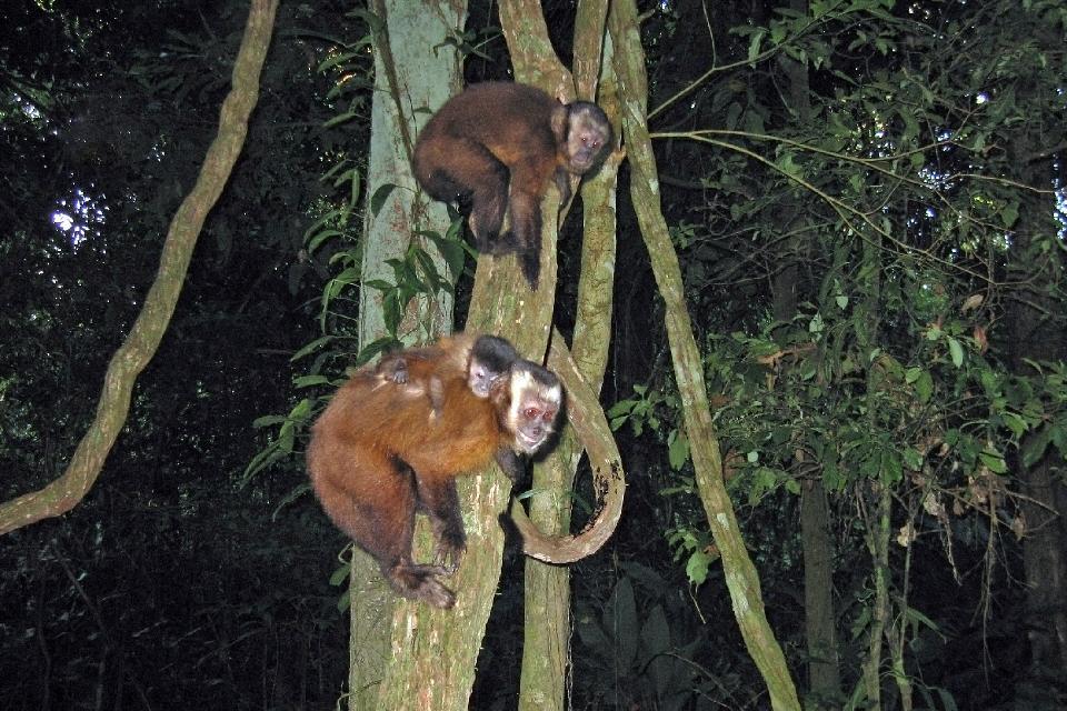 La jungle amazonienne , Boa , Pérou