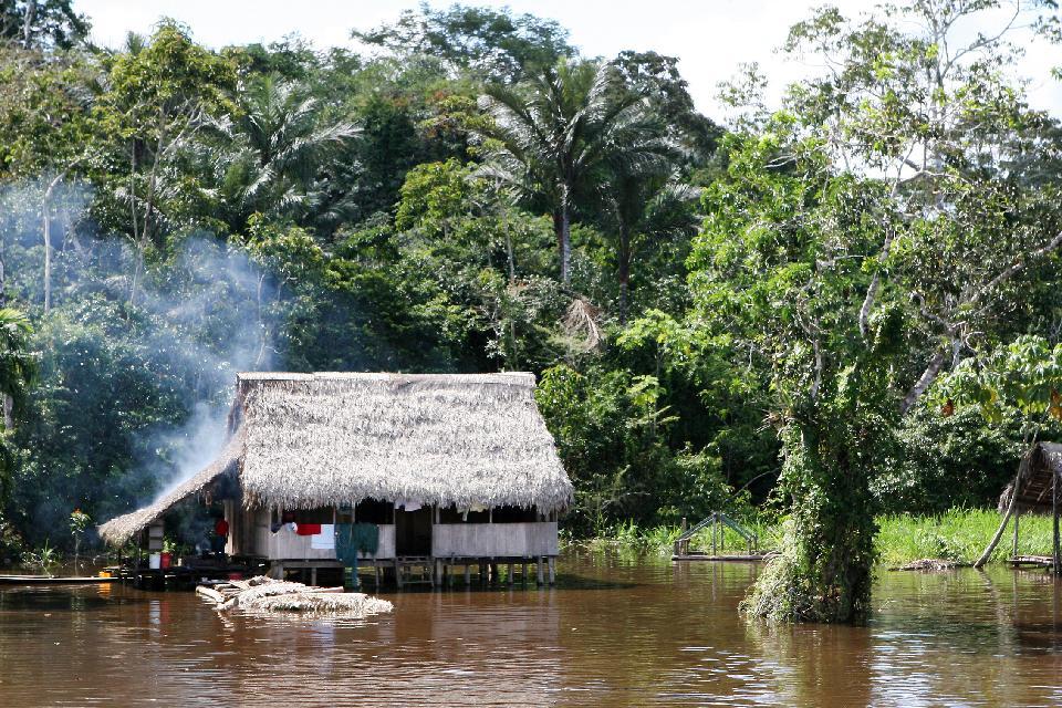 La jungle amazonienne , L'Amazone , Pérou